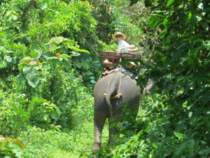 Elephant-Jeannie-Fruean