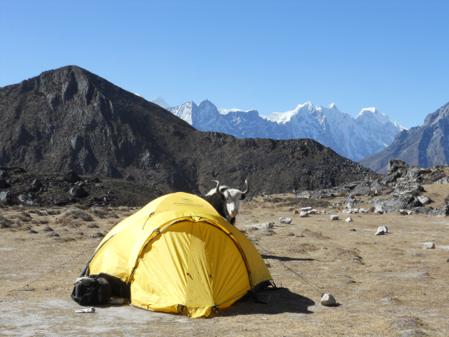 Optional 3-Day Trek. Not every day do we guarantee breakfast with a Yak.
